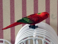Parrot, red